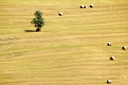 bale: Harvested field, lonely olive tree and bales in Abruzzos countryside, Italy. Stock Photo