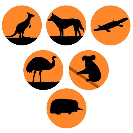 australian animals: illustration of Australian animals. Illustration