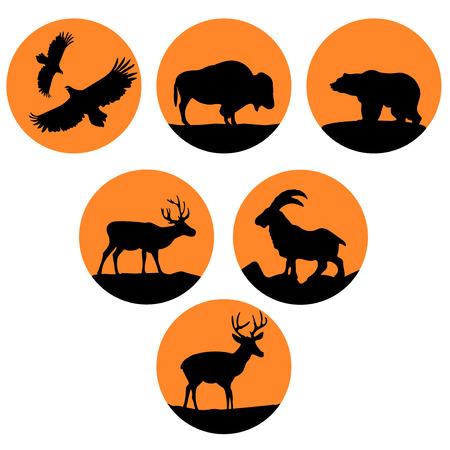 black american: illustration of wild animals of North America Illustration