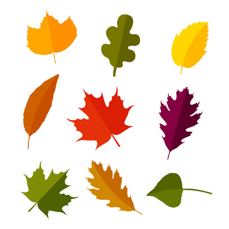Vector autumn leaves set in flat style. Isolated on white background.