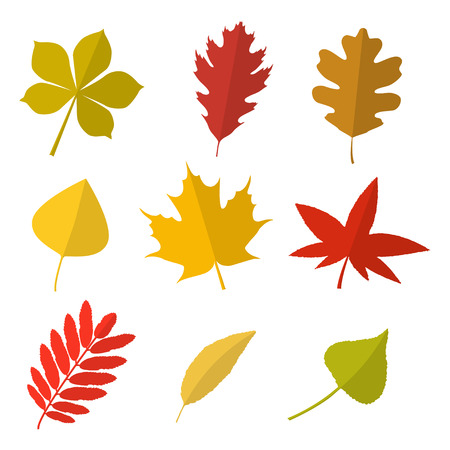 Set of vector autumn leaves. Collection of autumn leaves in flat style. Isolated on white background. Illustration