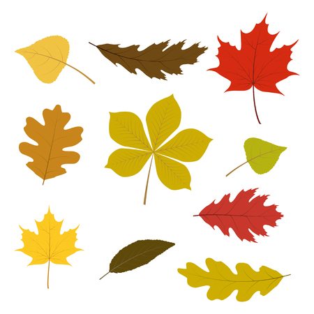fall leaves: Vector set of colorful autumn leaves for your autumn design. Isolated on white background.