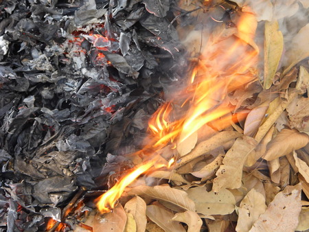 smut: ฺBonfire with dry leaves