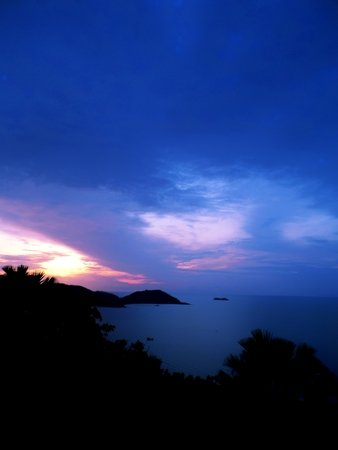 dawning: Blue dawn at the sea with tree