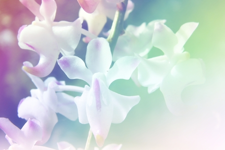 soft   focus: Close-up of orchid with soft focus color and blur effect