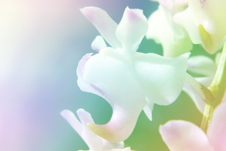dreamlike: Overlay of orchid with soft colorful background