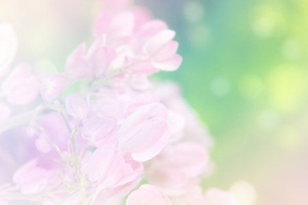 dreamlike: Coral vine flower with soft background filter effect, in other name Mexican coral vine,Mexican creeper, Queens jewels, Queens wreath