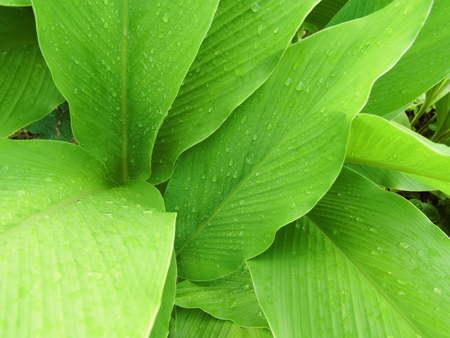 kropla deszczu: Zielony liść w tle z kropli deszczu