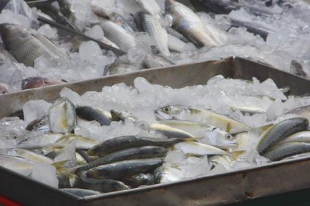 fish type: Closeup of mackerel fish at Thai fresh food market,this type of mackerel can found in gulf of Thailand Stock Photo
