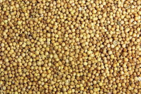 culantro: Fondo secado de semillas de cilantro