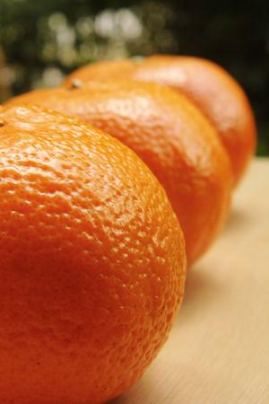 navel: Close-up of Fresh Navel orange