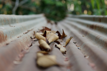 tin: Dried leaf on tin roof Stock Photo