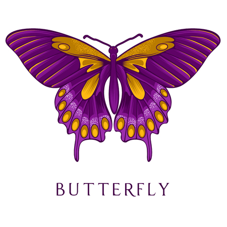 butterfly isolated: Abstract butterfly vector illustration. Illustration