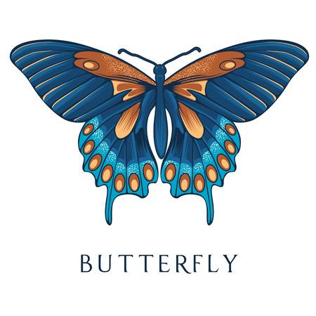 Abstract butterfly vector illustration. Illustration