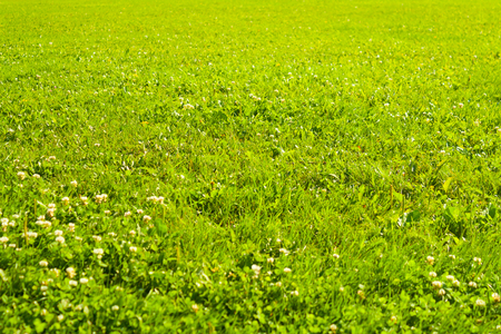Green grass texture. Background with Green Summer Landscape Stock Photo