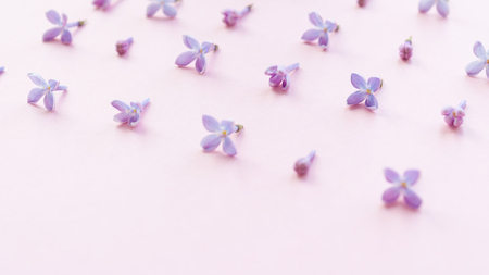 Modern pattern with little flowers blossom lilac on pink background. Copy spase. Selective focus