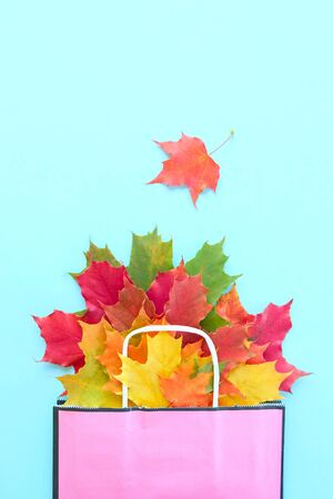 Autumn leaves in bag on blue background. Season composition for mock ups, template with text place.