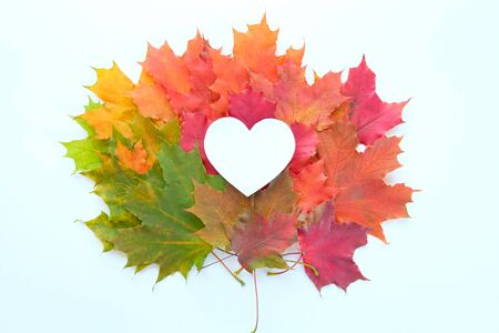 leaves are heart shaped on white background. Autumn gradient Stok Fotoğraf