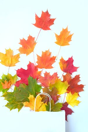 Autumn leaves in bag on white background. Season composition for mock ups, template with text place.