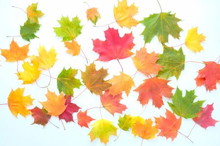Red and Orange Autumn Leaves Background. Maple leaves