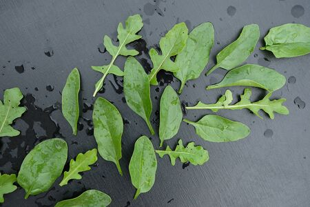 Above view of spinach and arugula leaves on a black wooden background 写真素材