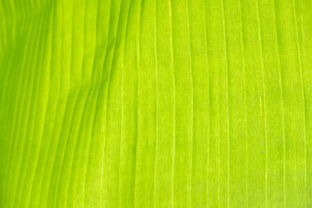 Tropical leaves, summer conept, green background Abstract backdrop