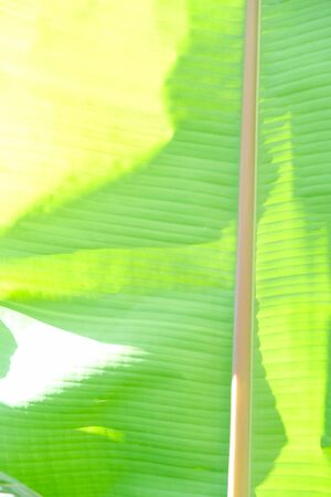Tropical leaves, summer conept, green background Abstract backdrop Banco de Imagens