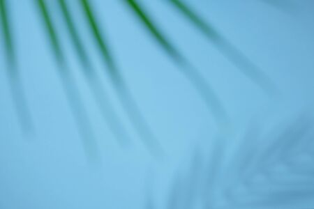 Abstract background of shadows palm leaves on blue wall.
