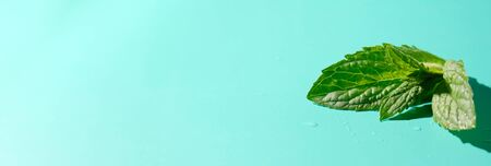 mint leaves with drops water and shadow on blue background