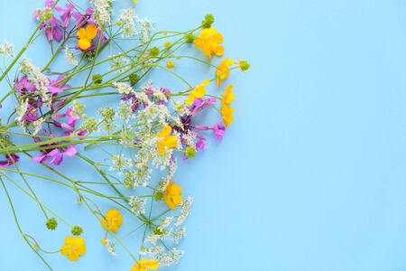 Bouquet of wild flowers on blue background. Summer card
