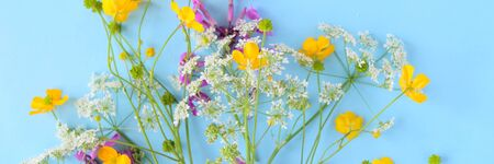 Bouquet of wild flowers on blue background. Long format for web