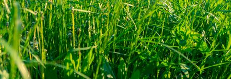 Abstract natural backgrounds with beauty bokeh. Perfect green background by the fresh grass Фото со стока