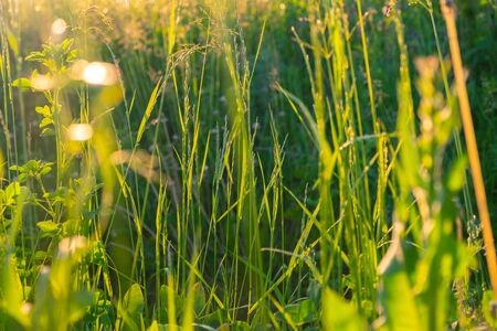 Abstract natural backgrounds with beauty bokeh. Perfect green background by the fresh grass against the background of sunlight