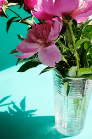 Pink peonies and leaves with hard shadow on pastel background, copy space. Peonies in a crystal vase. PEONIES WITH TREND SHADOWS