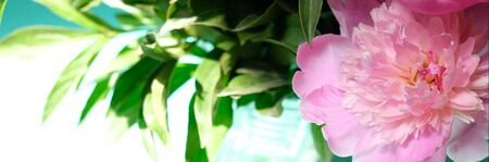 Pink peonies and leaves with hard shadow on pastel background. Trendy pattern, summer concept.