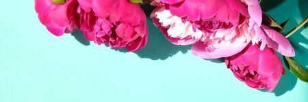 Pink peonies and leaves with hard shadow on pastel background, copy space. Trendy pattern, summer concept. Top view. PEONIES WITH TREND SHADOWS Фото со стока