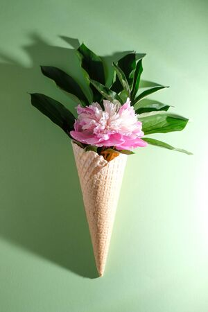 Peony flower in a waffle cone. Summer concept. Flat lay. Trendy shadow