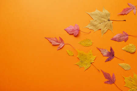 Leaves of fall red, orange, yellow leaf fall. Autumn concept