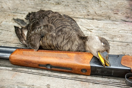The killed duck