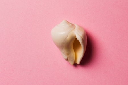Sea shell on the pink background. Travel concept.