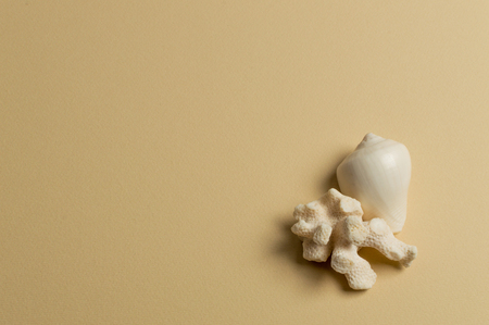Sea shell and coral on the olive background. Summer sale. Standard-Bild