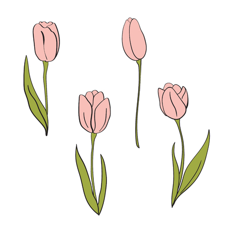A Vector pink tulips illustration. Floral isolated elements. For design, card, print or background.