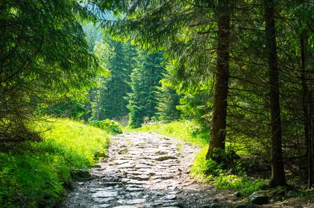 Tourism in the mountains. Hiking trail. Summer in Zakopane. Standard-Bild