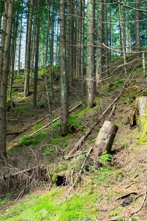 Tatra National park in Zakopane. Hiking trail in mountains.