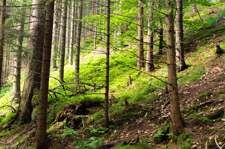 Hiking trail in mountains. Tatra National park in Zakopane.
