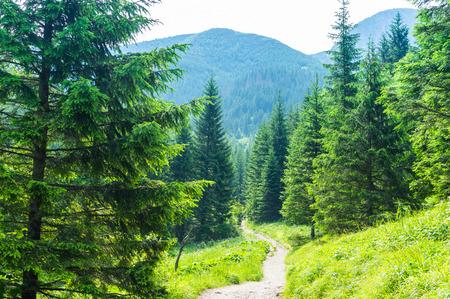 Hiking trail. Tourism in the mountains. Summer in Zakopane.