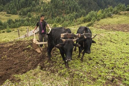 JUNBESI, NEPAL - CIRCA OCTOBER 2013: cultivation fields in Nepal are still made by human hands circa October 2013 in Junbesi.