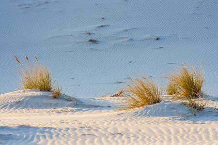 sandbank: Baltic Sea