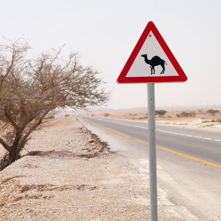 Nice road sign attention camels