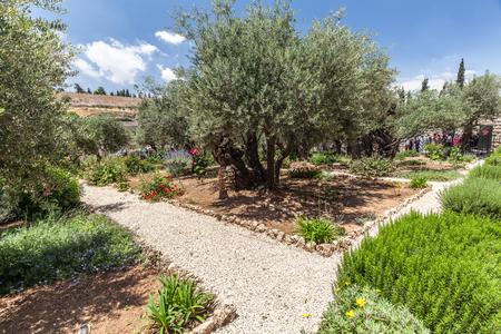 JERUSALEM, ISRAEL - CIRCA MAY 2018: View of Gethsemane circa May 2018 in Jerusalem.